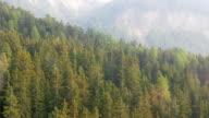 Aerial malerischen Kiefernwald am Dolomiten Italien