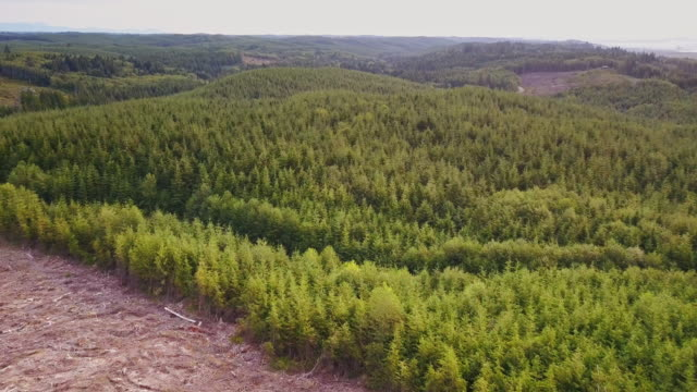 Aerial Shot Flying from Tree Stumps to Lush Forest