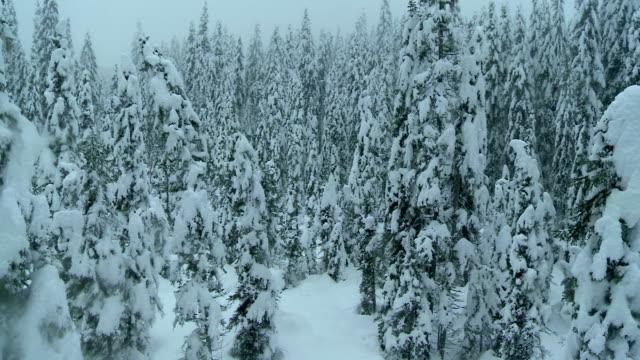 Luftaufnahme von einem nebeligen Winter Forest