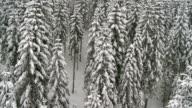 Aerial Shot Of A Snowbound Forest