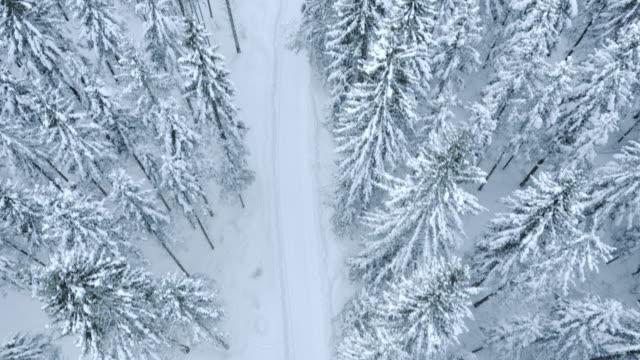 Veduta aerea di un sentiero di neve tra gli alberi whitened