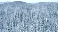 Aerial shot of a vast snow covered forest landscape