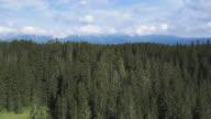 Luftaufnahme eines riesigen spruce tree forest