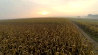 HD: Aerial Shot Of Corn Fields At Dawn