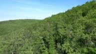 Luftaufnahme des dichten mediterrane Wald
