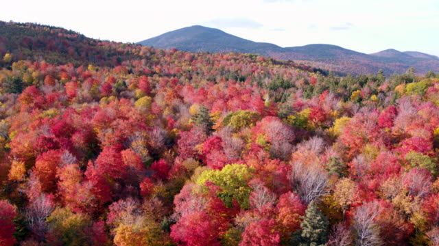 Aerial shot of fall foliage in the white mountains of New Hampshire
