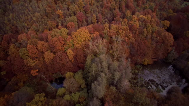 aerial shot of forest fall tree crowns with ponds