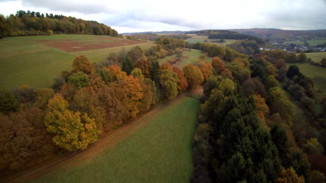 aerial shot of forest fall trees in rolling meadow landscape