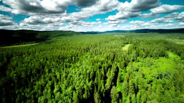 Luchtfoto van Forest wildernis
