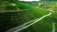 Aerial shot of Vineyards - Ahrtal - Germany