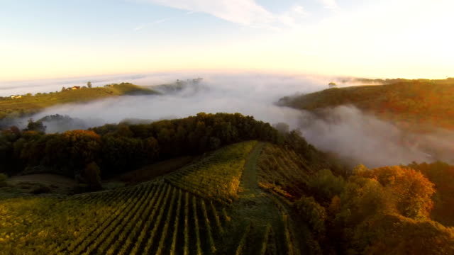 HD: Aerial Shot Of Vineyards In The Fog