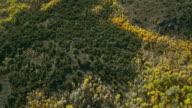 Aerial Shot Of Yellow Aspens In Autumn