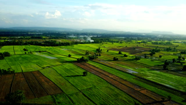 Aerial Shot Rice Field And Mountain View