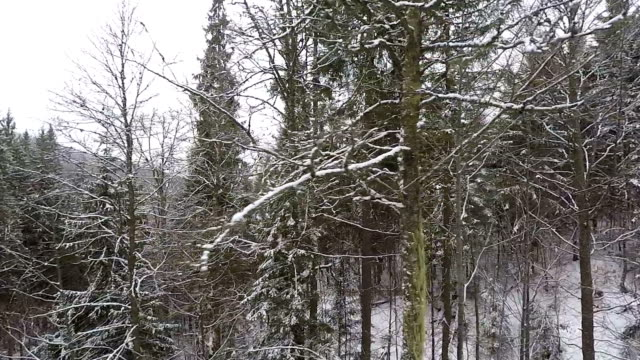 Aerial shot: Winter forest covered with snow.