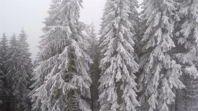 Aerial shot. Winter forest. Trees covered with snow.