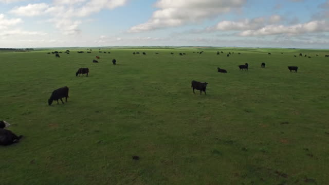 Aerial South Dakota Countryside