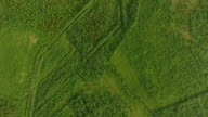 Aerial top view of forest and grass