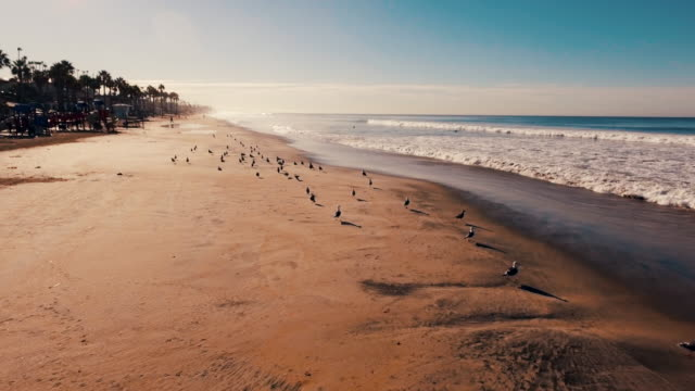 Aerial tracking shot of a beautiful sunrise sparkling off the ocean and sand as seagulls fly about.