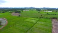Aerial videon ovan risterrasser i en vacker dag