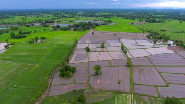 Aerial Video über Reisterrassen in einen schönen Tag