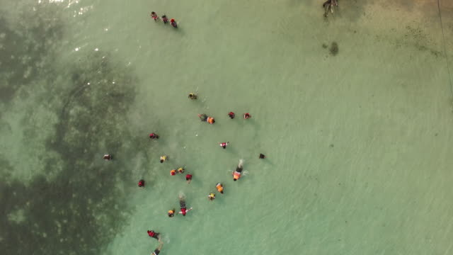 Aerial Video of a group of people snorkeling around the beach