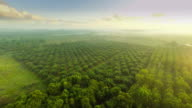 Aerial video of agriculture field