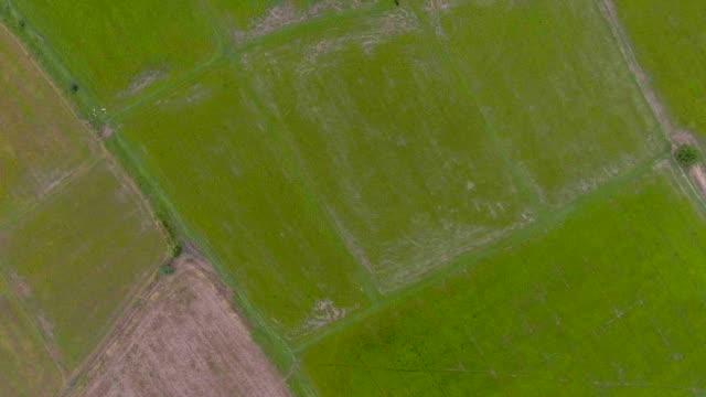 Aerial Video von Reis-Terrassen in einem wunderschönen Tag mit Gebirgshintergrund