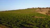 Aerial video over vineyards