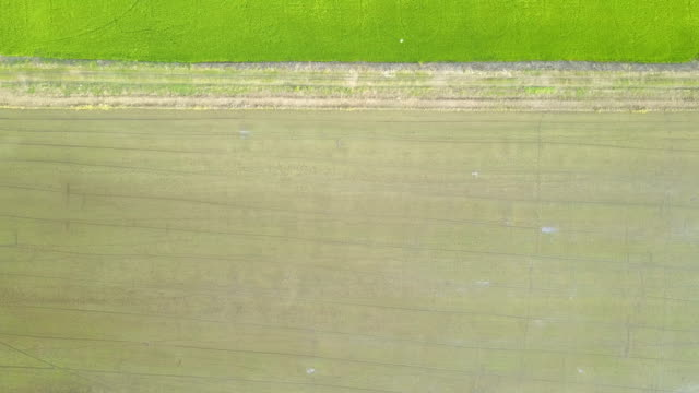 Aerial view  field paddy