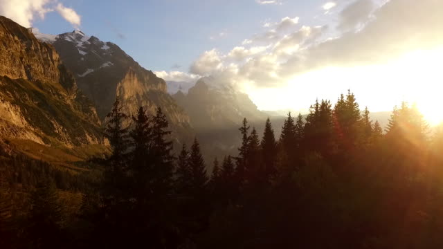 Aerial (drone) view flying over pine trees towards snowcapped mountains at sunset