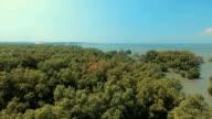 Luftaufnahme: Mangrove forest in der Provinz Chonburi, Thailand.