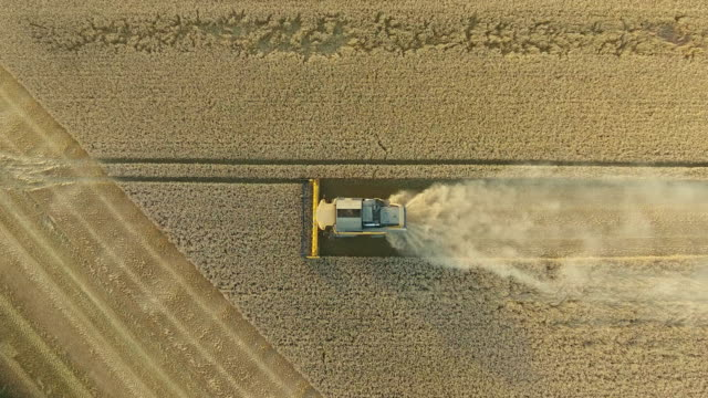 Aerial view of a combine harvester harvesting crop