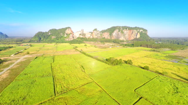 aerial view of agriculture area