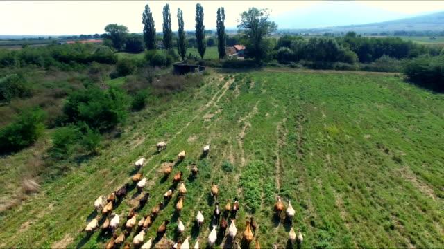 Aerial view of biodynamic farm