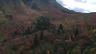 Aerial view of colorful forest in mountain valley