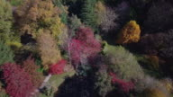 Aerial view of colourful trees and a lake during autumn, Victoria, Australia