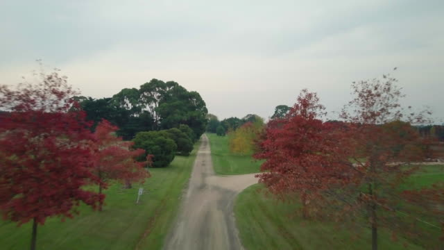 Aerial view of colourful trees in a dirt road during autumn, Victoria, Australia