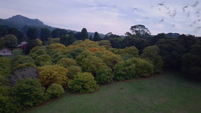 Aerial view of colourful trees with goose flying and landscape in autumn, Victoria, Australia