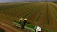 Aerial view of Combine Harvester -harvesting Green fields of the Hula valley