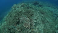 Aerial View of coral reef with Leaf Coral