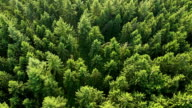 Aerial view of forest. Part2