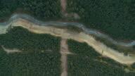Luftbild von Wald.