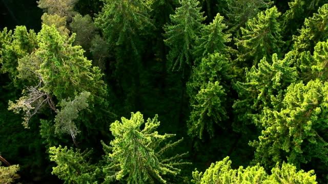 Arial vista foresta