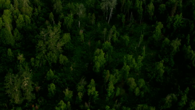 Aerial view of forest wilderness, USA