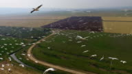 Aerial view of Great white pelicans  Migrating north in the Hula Valley