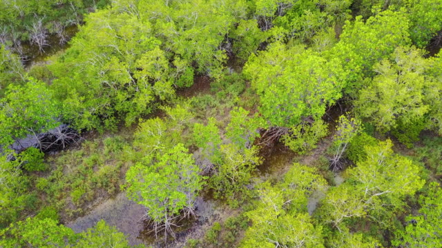 Aerial view of green mangrove forest