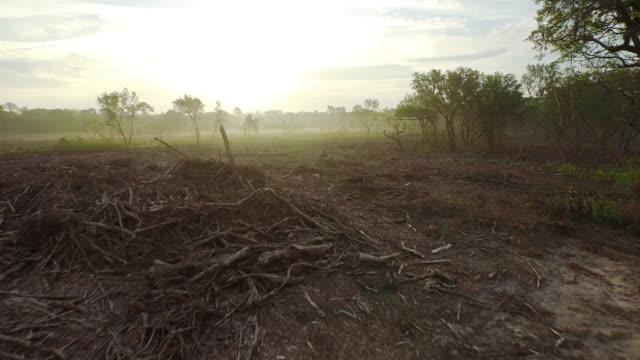 Aerial View of Land Devastated by Deforestation