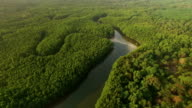 Aerial view of mangrove forest in Thailand