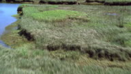 Aerial view of marshlands