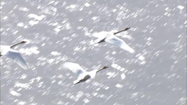 description aerial flying birds - photo #49
